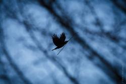To miało być zdjęcie czołowe, jako wróżba roku. Normalnie to gołąb z gałązką oliwną, jako zapowiedź pomyślności, powinien lecieć. Niestety w palmową niedzielę leciała czarna wrona z suchą gałązką. Dziś już wiemy, czego to była zapowiedź. ;).