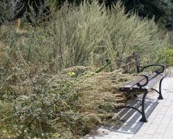 Kwietna łąka w Parku Jana Pawła II.