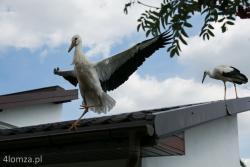 Szpitalik dla ptaków w Drozdowie.