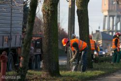 """Wycinka drzew przy ul. Sikorskiego. Jak twierdzi ratusz drzewa """"kolidują z nową infrastrukturą, również podziemną""""."""