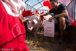 I Świński Półmaraton.  Główną nagrodę świnię (w kokardce) wylosował Adam Elsner