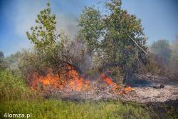 Susza. Zielone też się pali. N/z pożar traw i krzewów nad Narwią.