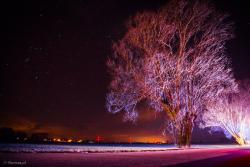 Nocne drzewo w światłach służb ratunkowych.