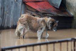 Zalanie Górki Sypniewo. Woda przybierała bardzo szybko doprowadzając do zalania DK61, drogi do Dobrzyjałowa i wielu posesji.
