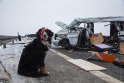Zdjęcie smutnego psa Rockyego z opaską na oku siedzącego na tle roztrzaskanego samochodu poruszyło wielu internautów. W wypadku koło Zambrowa, do którego doszło we wtorkowe popołudnie, ucierpiały trzy osoby, oraz pies, który wraz z parą Szwajcarów jechał w busie do Finlandii. Ich samochód zderzył się z tirem, ale na szczęścicie nic groźnego nikomu się nie stało... . Psem zaopiekowało się Zambrowskie Centrum Weterynaryjne skąd właściciele odebrali Rockyego i razem wrócili do domu.