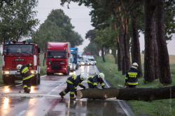 Wichura nad regionem powalała drzewa. Strażacy z OSP Podgórze usuwają pień drzewa z zatarasowanej DK 63.