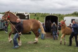 Wystawa koni w Piątnicy.